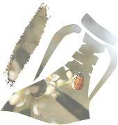 Denominación de Origen Estepa, entidad que certifica la calidad del Aceite de Oliva Virgen Extra
